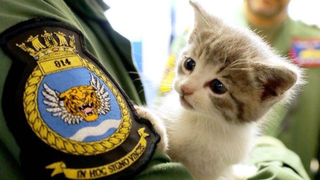 tigger the navy kitten
